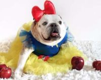 Новый флешмоб: собак наряжают в прикольные костюмы