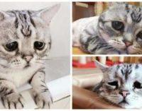 «Грустная» кошка стала звездой Сети