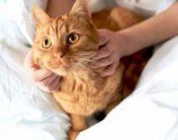 «Села батарея»: внезапно уставший кот развеселил Сеть