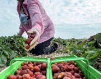 Польша намерена упростить процедуру трудоустройства иностранцев