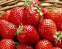 Названа вкусная ягода, которая помогает победить рак