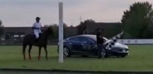 Электрокар Tesla сразился в гонке с лошадью